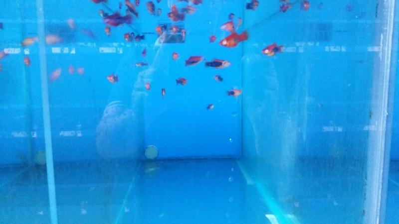 Recherche avis sur oxyfish 20150618