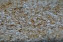 Les algues en aquarium d'eau douce Algue_12