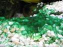 Les algues en aquarium d'eau douce Algue_14
