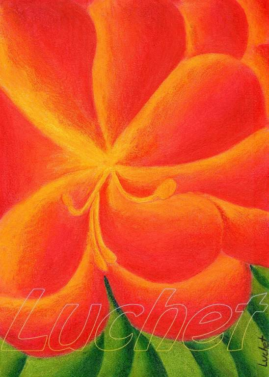 Forme a Colori  Fiore_10