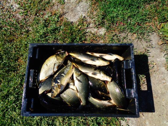 Запуск рыбы КАРП-2015г. Dsc00024