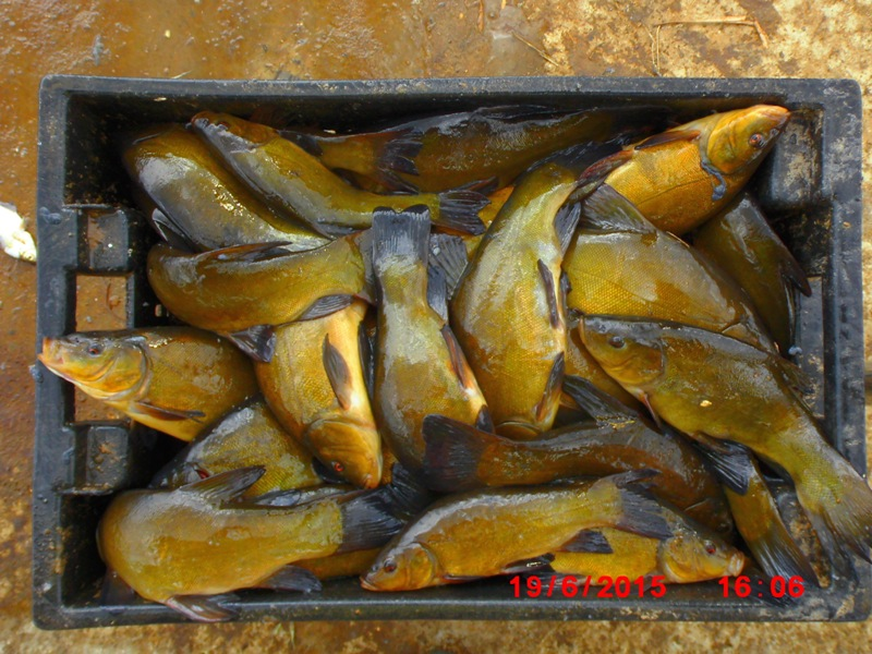 Запуск рыбы КАРП-2015г. Dsci4515