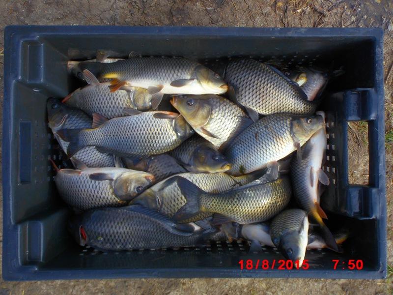 Запуск рыбы КАРП-2015г. Dsci5610