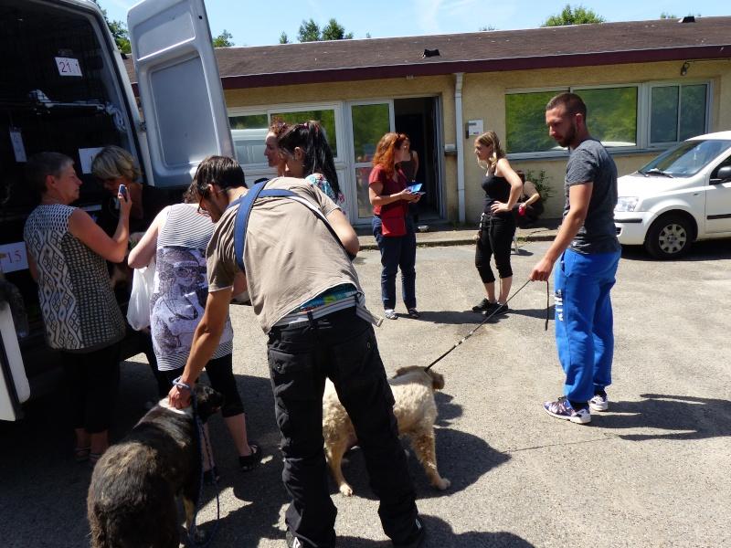 RAPATRIEMENT CAMION   ARRIVEE ST AVOLD ET PARIS LE 28 JUIN 2015 - Page 7 P1010392