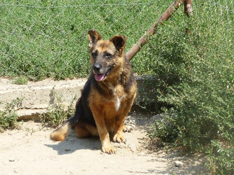 PEEPEE - Née 2004 - 22 kg -mamie très touchante - BELLA/Parrainée/Réservée refuge partenaire asso Mukitza P1010565