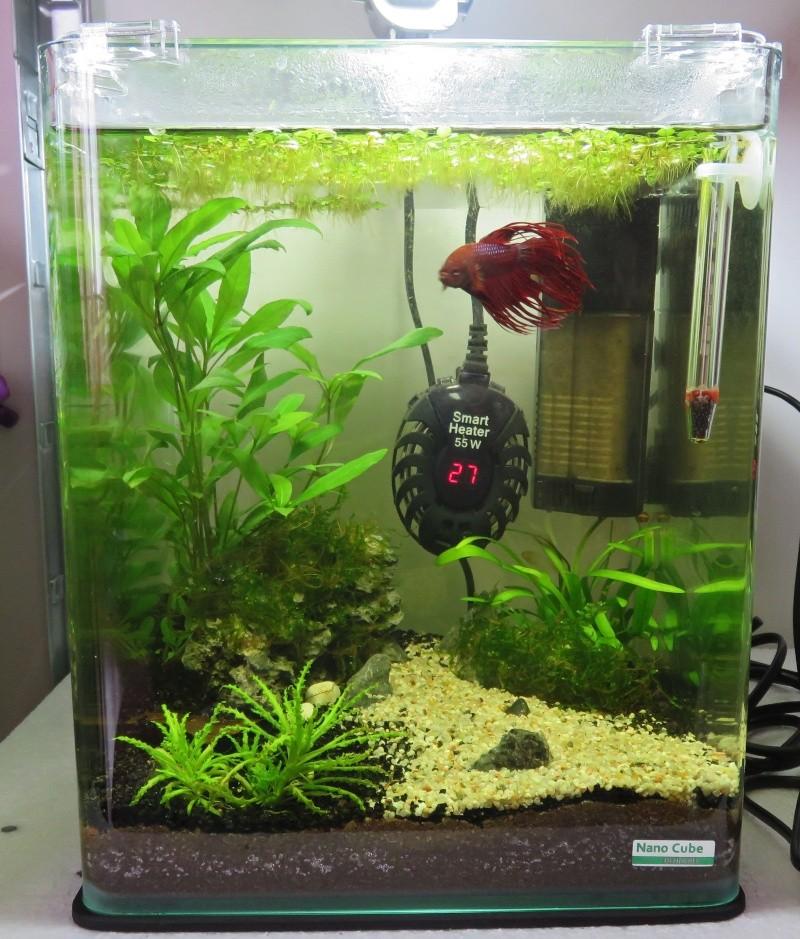 Aquarium d'Hadès : Evolution P3 - Page 2 Aquari10
