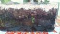 Orchideen in Glasvase 3 - Seite 13 Blatt10