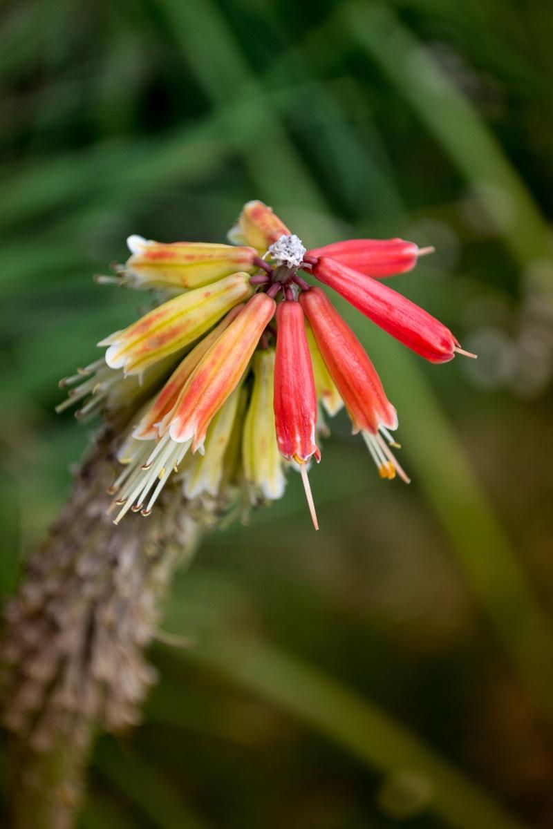 Parasol de fleurs _dsc0012