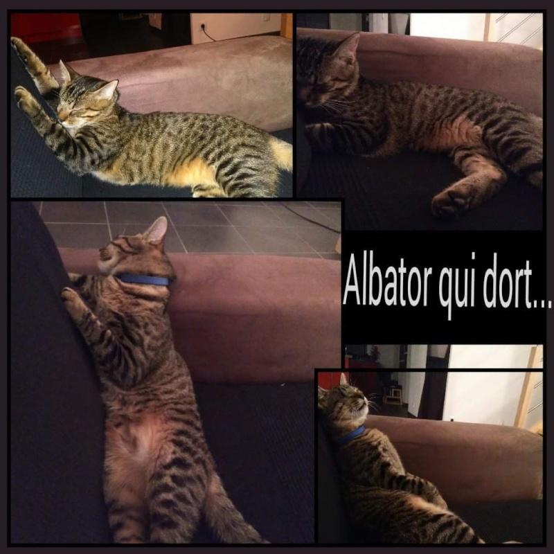 Albator, mâle type européen tigré né 15/10/2014 - Page 8 Receiv26