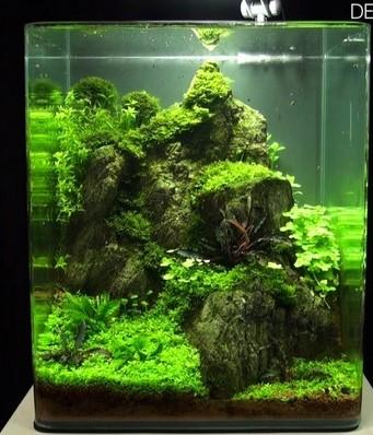 Petit aquarium de 10L que faire  Screen12