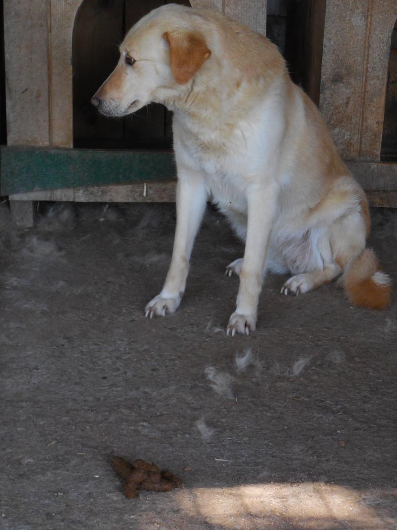 ALBISHOR / WHITE - MÂLE de couleur BLANCHE - né en 2009 - Lenuta, parrainé par Armance et Epinette -  R-VV-LBC-SC- SOS - Page 2 Albish10