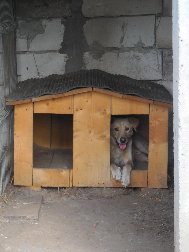 BOX (trois) , croisé labrador, né en 2007 -  Parrainée par Samie -R-F-SOS-SC- - Page 2 Flamme11