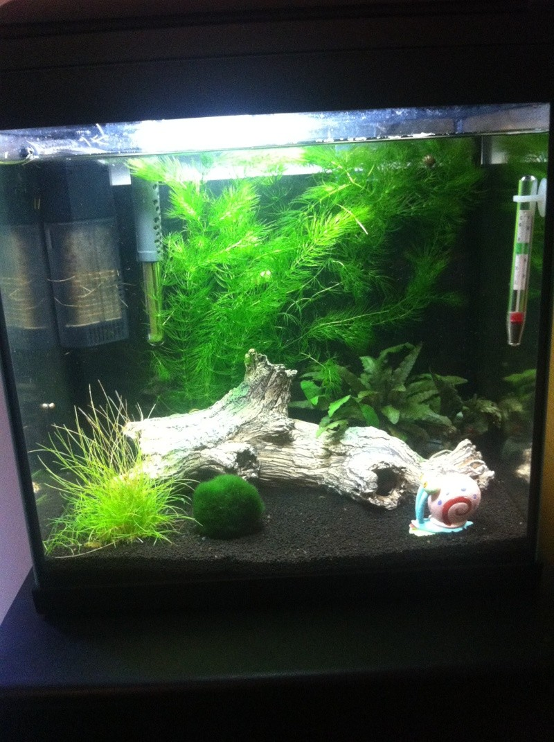 Petit aquarium 30L pour novice ! Photo_12