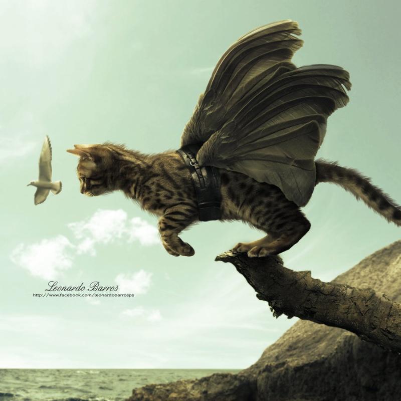 ddistance - Page 3 Cat_fl10