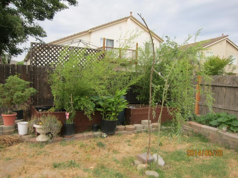 Leo's first garden Img_2710
