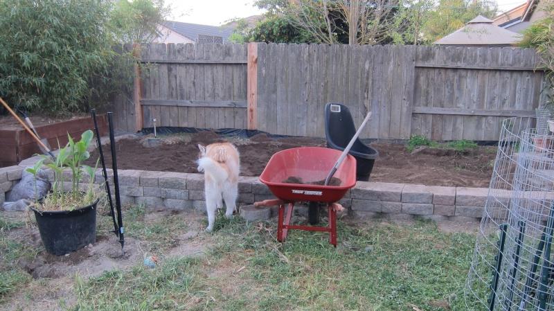 Leo's first garden Img_3611