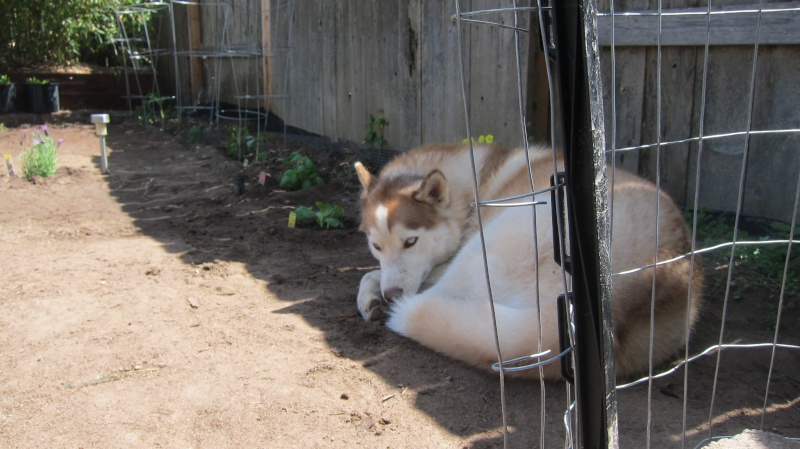 Leo's first garden Img_3613