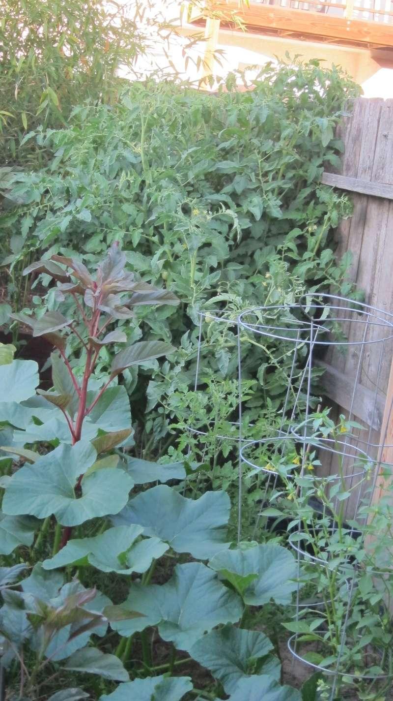 Leo's first garden Img_4011