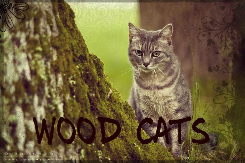 Wood Cats