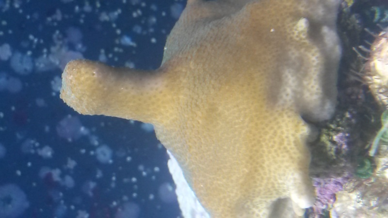 identification corail dur 20150710