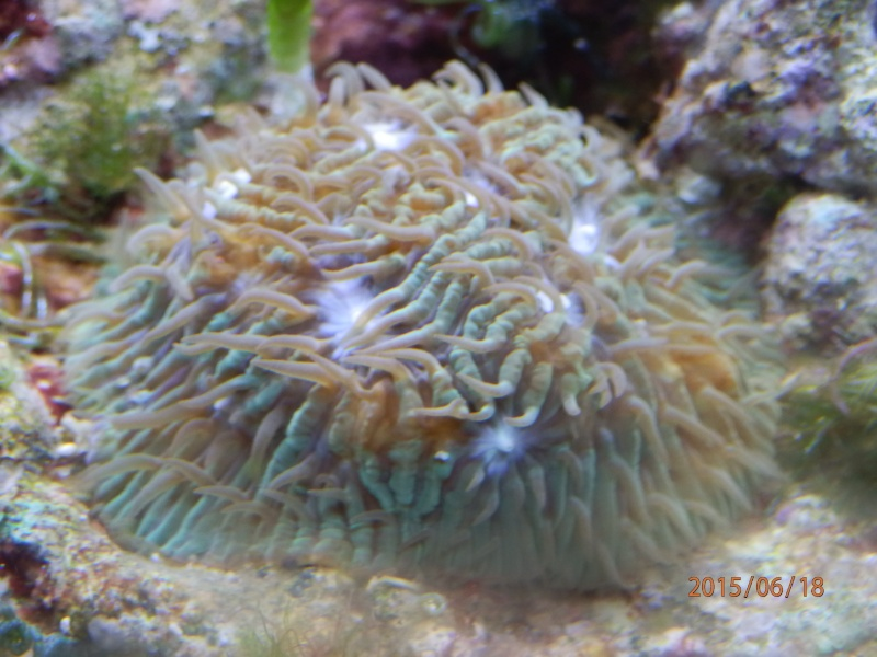 identification corail dur P6180423