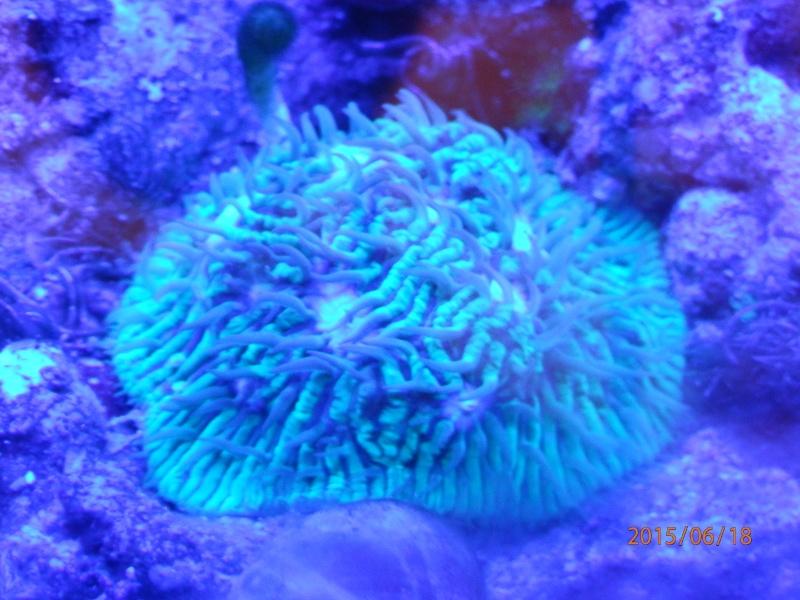 identification corail dur P6180424