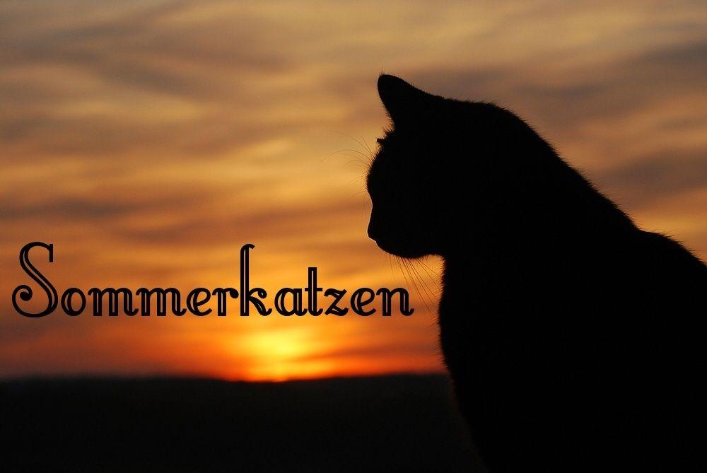 Sommerkatzen