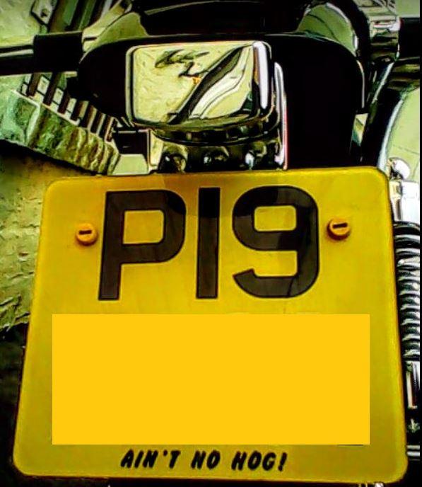 My Plate Piggie10