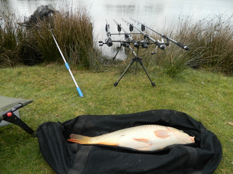 enfin quelques photos de poissons!!! Dscn6815