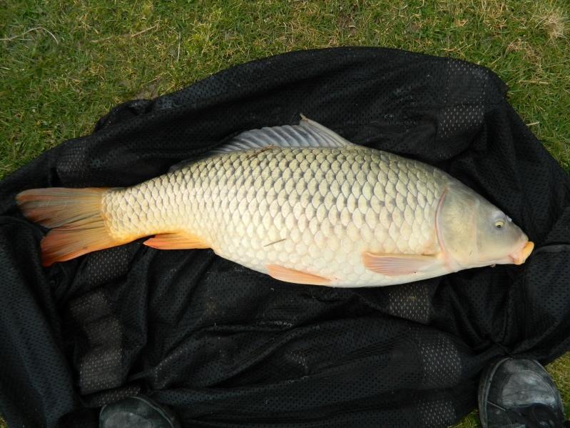 enfin quelques photos de poissons!!! Dscn6816