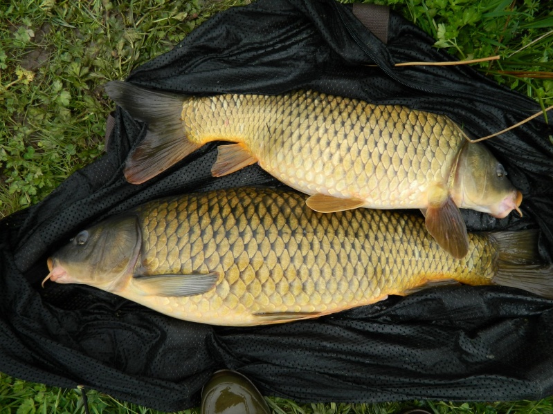 enfin quelques photos de poissons!!! Dscn7010