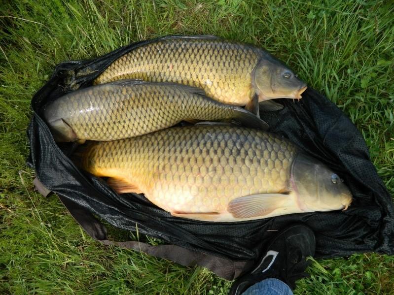 enfin quelques photos de poissons!!! Dscn7111