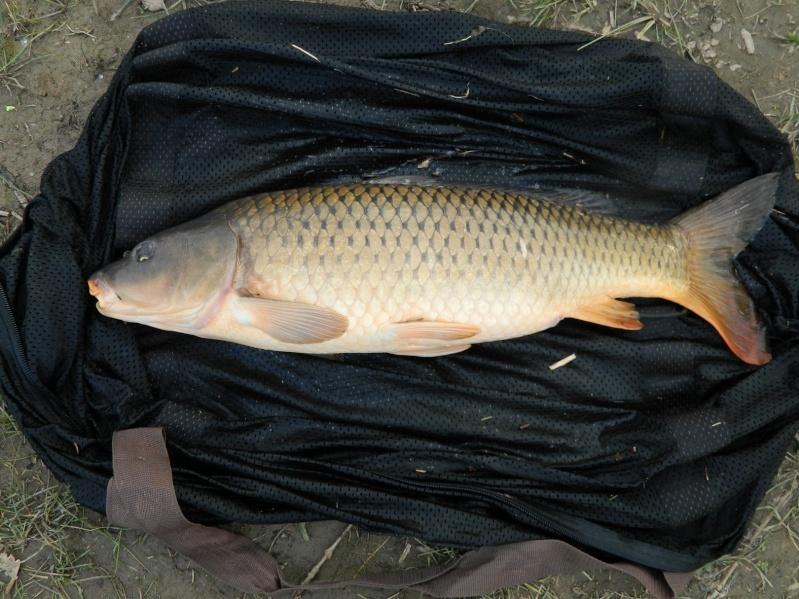 enfin quelques photos de poissons!!! Dscn7310