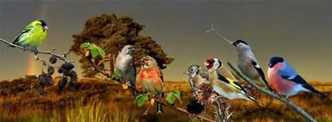 التجمع المغربي لعلم الطيور