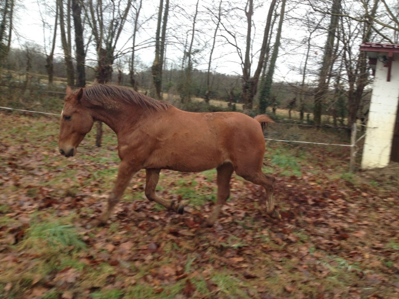 QUICKLY, poney New Forest PP, sauvé par Clémence64 !!!! (Mai 2013) - Page 5 Img_3117