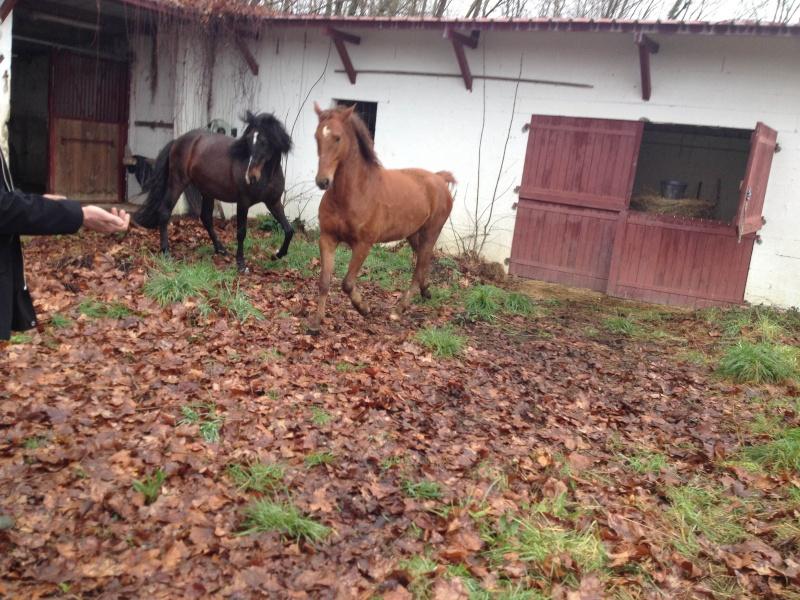 QUICKLY, poney New Forest PP, sauvé par Clémence64 !!!! (Mai 2013) - Page 5 Img_3118