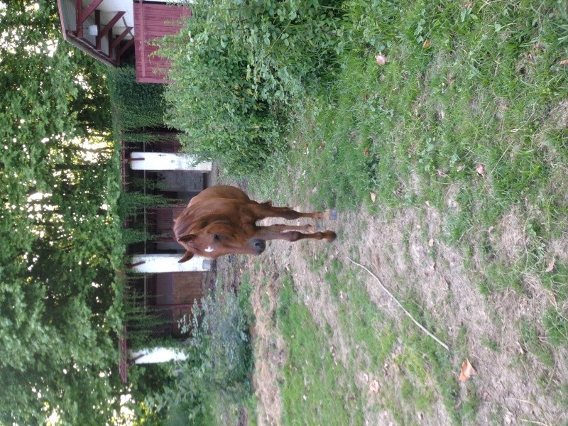 QUICKLY, poney New Forest PP, sauvé par Clémence64 !!!! (Mai 2013) - Page 5 Img_3121