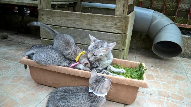 Les chatons du 1er Mai. - Page 3 20150611