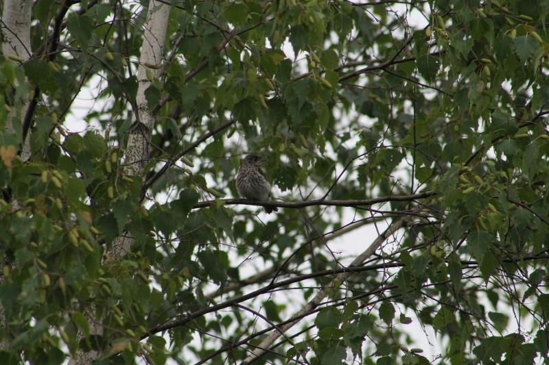 Quelqu'un connais peut être le nom de ce bébé oiseau..... Img_7510