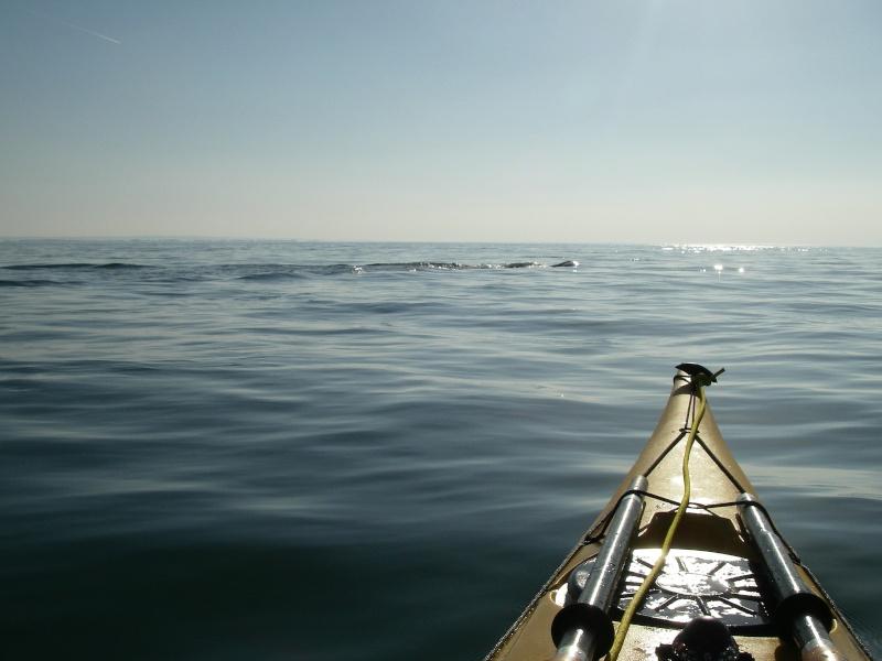 Les incroyables maisonnettes en pleine mer sur les îlots des Écréhou. Imgp0216
