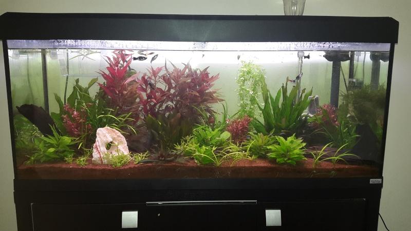 Mon aquarium! 20150310