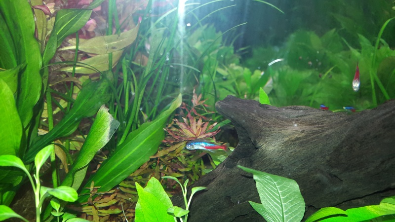 HÉCATOMBE dans mon aquarium!! :( 20150615