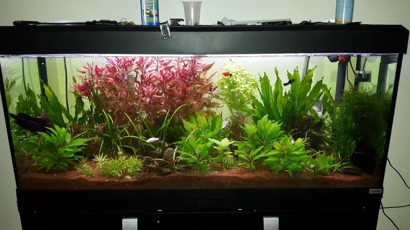 HÉCATOMBE dans mon aquarium!! :( 20150616