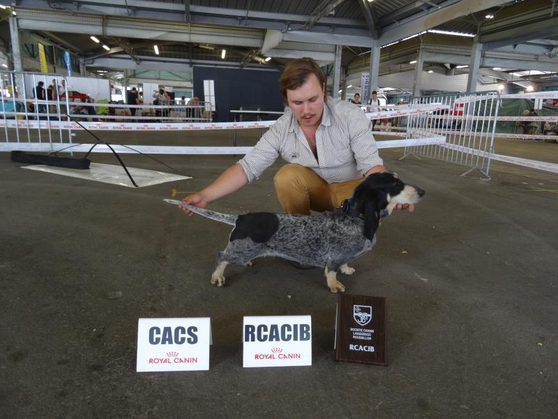 Exposition canine de Montpellier Dsc00111