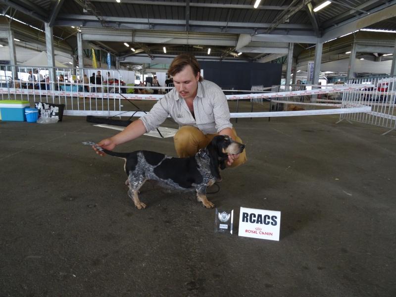 Exposition canine de Montpellier Dsc00112