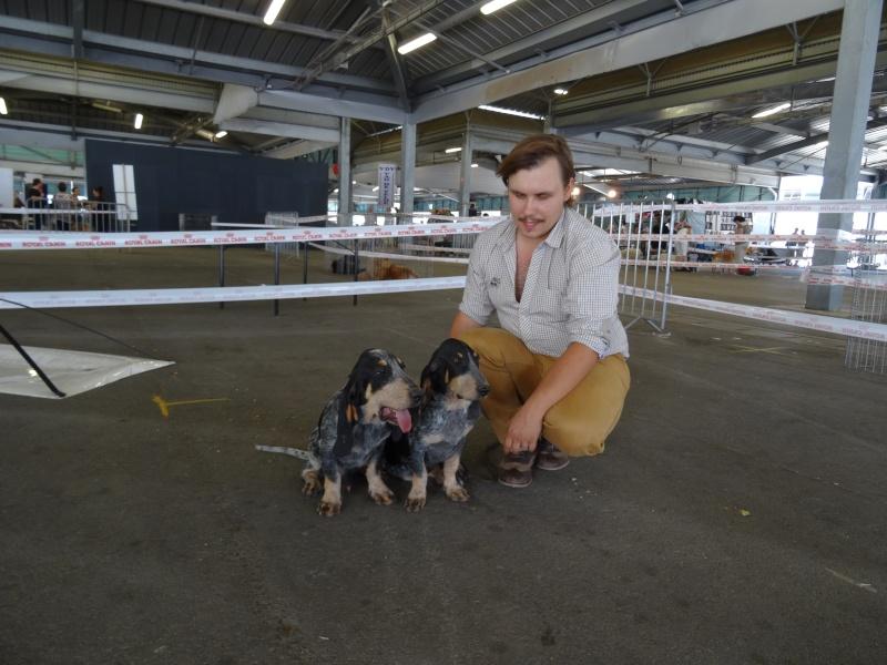 Exposition canine de Montpellier Dsc00114
