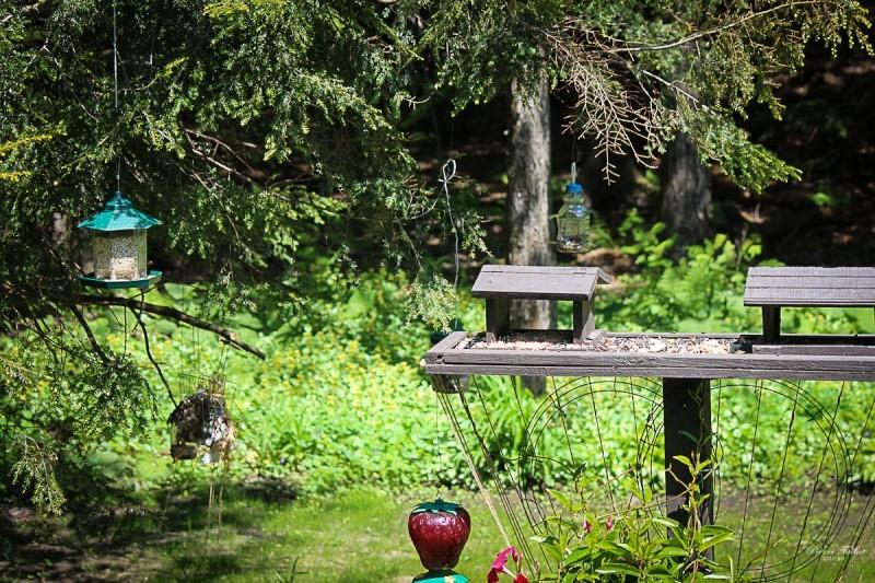 Colibri à gorge  rubis 2015ma37