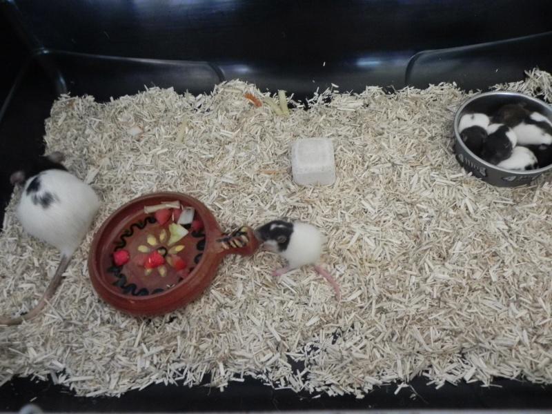 Ratons kinder de Ganesh  Dscn3611