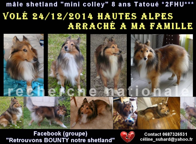 PERDU male Schetland BOUNTY 8 ans departement 05 11406611