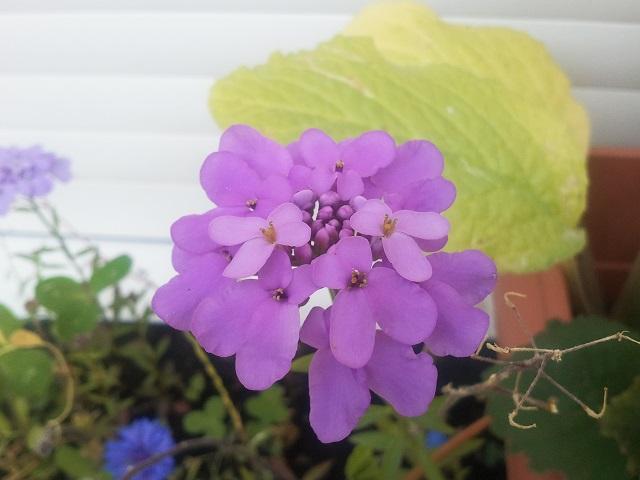 """Mes petites plantes """"de rien"""" pour attirer les pollinisateurs dans ma résidence Petite15"""